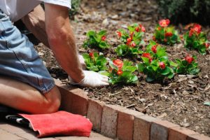 Person planting flowers in a flower bed