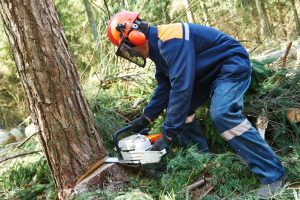 Man in Blue Coveralls Sawing a Tree Down